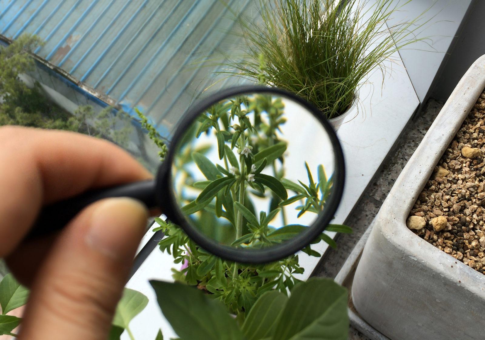 карантин растений в картинках этом обзоре решили